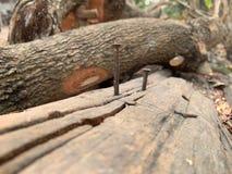 Pregos pregados em pregos oxidados da madeira na madeira deteriorada foto de stock royalty free