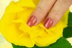 Pregue o tratamento de mãos do projeto decorado com uma flor de uma rosa amarela foto de stock royalty free
