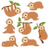 Preguiças dos desenhos animados Preguiça bonito que pendura no ramo nos caráteres animais do vetor da selva preguiçosa da florest ilustração do vetor