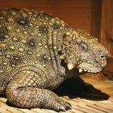 Prehistoric Animal - The Ark Encounter Stock Image