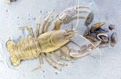 Prehistoric animal - crayfish Stock Photos