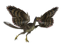 Prehistoric Bird. 3D render featuring an archaeopteryx, a prehistoric bird that lived during the late Jurassic period. The archaeopteryx might be the royalty free illustration