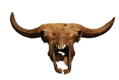 Prehistoric bison's skull Stock Images