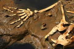 Prehistoric Bones Stock Photo