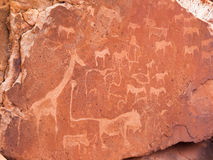 Prehistoric Bushman engravings at Twyfelfontein in Namibia Royalty Free Stock Photo
