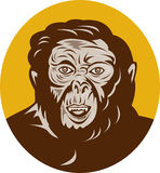 Prehistoric caveman man head Royalty Free Stock Photo
