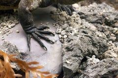 Prehistoric Dinosaur Fossile. Prehistoric Skeleton Dinosaur Fossile Photo Royalty Free Stock Images