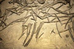 Prehistoric Dinosaur Fossile. Prehistoric Skeleton Dinosaur Fossile Photo Stock Image