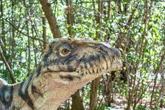 Prehistoric dinosaurs raptor. Model of dangerous prehistoric dinosaurs raptor in wildlife Royalty Free Stock Images