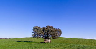 Prehistoric dolmen under a Cork Oak. In the Alentejo region. Portugal Stock Image
