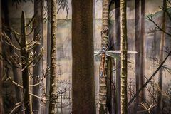 Prehistoric Dragonfly. Giant Meganeura dragonfly depicted in a forest in the  Carboniferous period Stock Photos