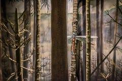 Prehistoric Dragonfly Stock Photos