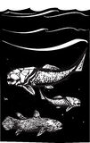 Prehistoric Fish. Woodcut style image of a Dunkleosteus an armored ancient fossil fish and Coelacanth swimming in the ocean vector illustration
