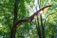 Prehistoric flying dinosaur Pteranodon in nature. Big model of prehistoric flying dinosaur Pteranodon in nature. Realistic scenery Stock Images