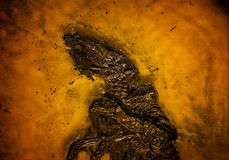Prehistoric Fossil Background Stock Images