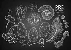 Graphic prehistoric collection. Prehistoric graphic collection of dinosaur body parts, fossils and plants. Vector elements isolated on the chalkboard Stock Photography