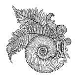 Prehistoric graphic seashell and fern branches. Graphic prehistoric seashell with fern branches growing out from it. Vector natural illustration drawn in Stock Photography