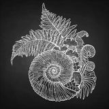 Prehistoric graphic seashell and fern branches. Graphic prehistoric seashell with fern branches growing out from it. Vector natural illustration drawn in Royalty Free Stock Photo