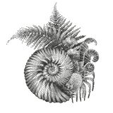 Prehistoric graphic seashell and fern branches. Graphic prehistoric seashell with fern branches growing out from it. Vector natural illustration drawn in Royalty Free Stock Image