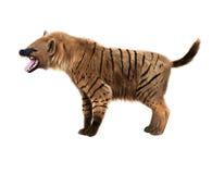 Prehistoric hyena illustration Royalty Free Stock Photography