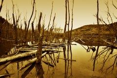 Prehistoric landscape Royalty Free Stock Photo