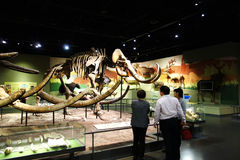 Prehistoric life hall Royalty Free Stock Images