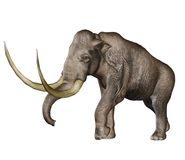 Prehistoric mammoth Stock Photo
