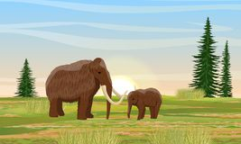 Prehistoric mammoth and cub on plain with firs and grass. royalty free illustration