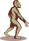 Prehistoric man ape walking Stock Image