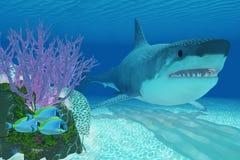 Prehistoric Megalodon Shark Royalty Free Stock Images