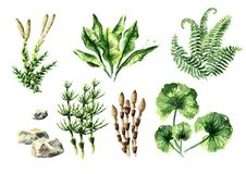 Prehistoric plants collection. Watercolor hand drawn illustration, isolated on white background. Prehistoric plants collection. Watercolor hand drawn stock illustration