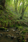 Prehistoric Rain Forest Stock Photography
