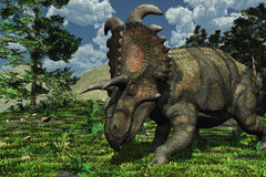 Prehistoric Scene with Albertaceratops Stock Photography