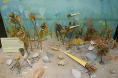 Prehistoric Sea Bottom Life Royalty Free Stock Images