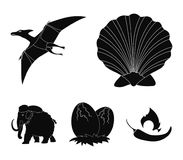 Prehistoric shell, dinosaur eggs,pterodactyl, mammoth. Dinosaur and prehistoric period set collection icons in black. Style vector symbol stock illustration Stock Image