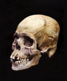 Prehistoric Skull Isolated on Black Stock Photography