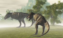 Prehistoric T-Rex. Two Tyrannosaurus Rex dinosaurs rest in the early morning light before the days hunt Royalty Free Stock Photo