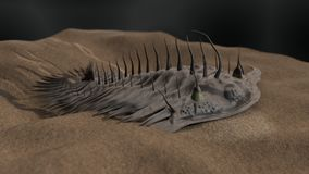 Free Prehistoric Trilobite 3d Illustration Stock Photo - 85652870