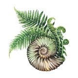 Prehistoric watercolor seashell and fern branches. Watercolor prehistoric seashell with the fern branches growing out from it. Hand painted natural illustration Stock Photography