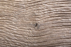 Prehistoric wood bog oak with fantastic scratched texture. Macro photo Stock Photography