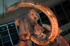 Prehistorycznego Mamutowego Wooly kła makro- zoom obraz royalty free