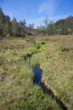 Preikestolen swampland Stock Photography