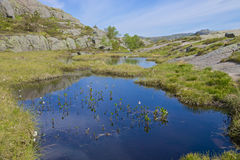 Preikestolen swampland 08 Royalty Free Stock Images