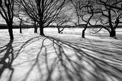 Prelude to Spring. Black and white photo of shadows cast on the snow with the potomac river in the background in washington dc. These trees will bloom in about a Stock Photography