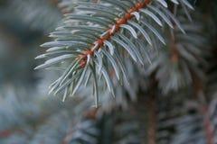 Preludio al Natale Fotografie Stock