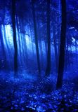 Salem Woods. A premade background of the woods at night time Royalty Free Stock Photos