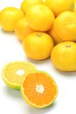 Premature delivery mandarin orange Royalty Free Stock Photo