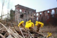 Première fleur Photographie stock