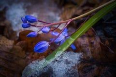 Première fleur Image stock