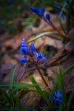 Première fleur Photo libre de droits